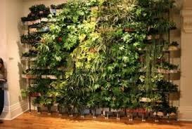 indoor apartment vegetable garden gardening ideas