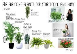 importance of indoor plants akshay