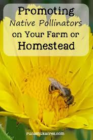 plants for native bees 82 best pollinators images on pinterest flower gardening