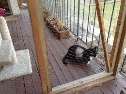 happy cat enclosures find cat enclosure cat furniture and cat