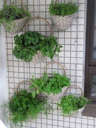 free photo balcony herbs verkikaalipuutarha free image on