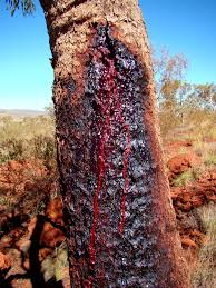 What Does Queen Anne Furniture Look Like The Zombie Bloodwood Tree Bleeds When It Is Wounded Strange Sounds