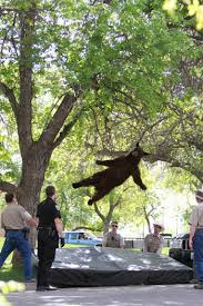 Bear Meme - best of the falling bear meme smosh