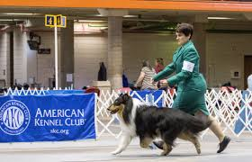 photos rapid city kennel club dog show photos