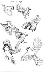 flying bird drawing free download clip art free clip art on