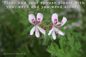 journal scrapbooking or seed swap quotes about weeds