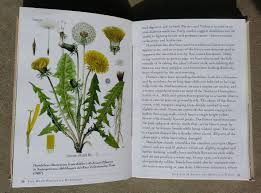 edible native plants australia the weed forager u0027s handbook a guide to edible and medicinal weeds