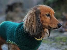 best 25 dog coat pattern ideas on pinterest dog coat pattern