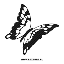 papillon clipart side view pencil and in color papillon clipart