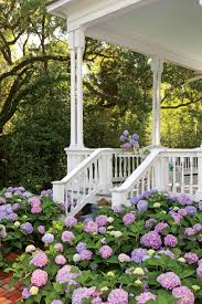 classic southern plants southern living