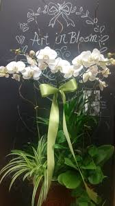 Orchid Delivery Cerritos Florist Flower Delivery By Charlene U0027s Events Cerritos