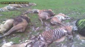 Ohio Wild Animals images Police say all escaped exotic animals accounted for diseased jpg