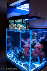 Reef Aquarium Lighting Reef Addicts Led Lights That Make Corals Pop With Color