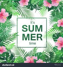 summer tropical background palm leaves hibiscus stock vector