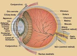 Anatomy Of The Eye Anatomy Of The Eye Causes Symptoms Diagnosis Treatment Analysis