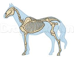 horse skeleton halloween horse anatomy drawing step by step pets animals free online