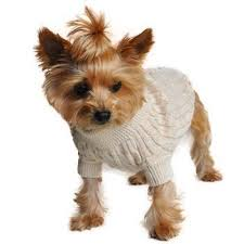 cable knit sweater by doggie design oatmeal high society