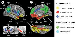 atrophy in distinct corticolimbic networks in frontotemporal
