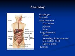 Anatomy Of Stomach And Intestines Gastrointestinal Obstruction Ppt Video Online Download