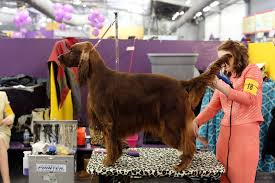 westminster kennel club dog show and what americans spend on their