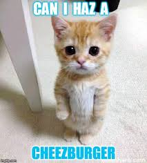 Meme Cheezburger - cute cat meme imgflip