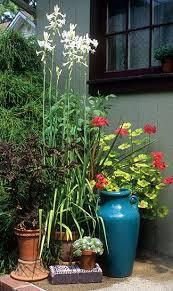 Fragrant Container Plants - 1005 best fragrant plants images on pinterest balcony plants