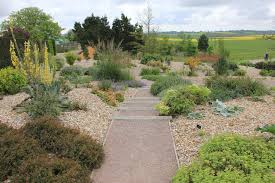 six drought tolerant perennials that thrive in adversity