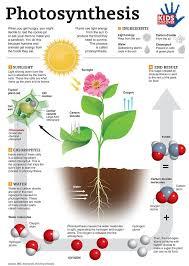 best 25 photosynthesis ideas on pinterest plants 3rd grade
