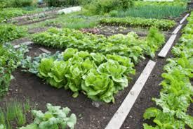 classy inspiration easy vegetable garden brilliant decoration easy