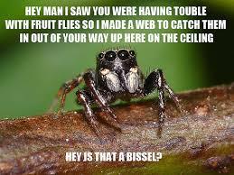 Spider Bro Meme - misunderstood spider meme wasp