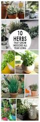 Herbs Indoors by Herbs To Grow Indoors U2013 Savingourboys Info