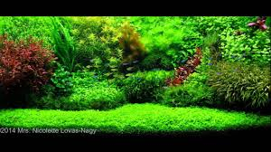 Aquascape Canada Aquascaping 2015 Youtube
