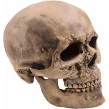 the meaning and symbolism of the word skull