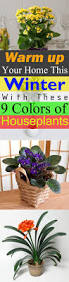 warm up your home this winter with these 9 colors of houseplants