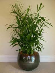 Small Desk Plants by Office Furniture Modern Office Plants Design Office Decor