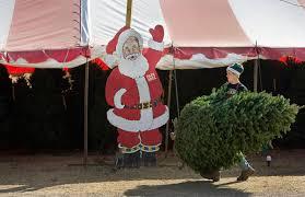 papa noel christmas tree lots
