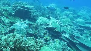diving christmas island one of australia u0027s indian ocean islands