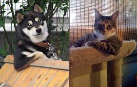 Cool Dog Meme - image 188324 the most interesting cat in the world know your meme