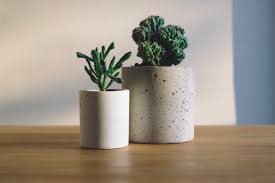 white ceramic flower pot with green cactus plant on brown wooden