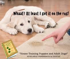 boxer dog training tips boxer dog training hotel argentina