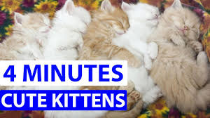 the most beautiful kittens 2017 compilation youtube