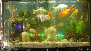 New Fish Tank Decoration