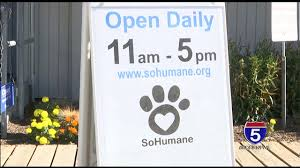 California Wildfires Pets by Sohumane Prepping To Take In Dogs From Wildfires Youtube