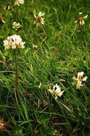 lawn hacks for organic gardening geeks north coast gardening