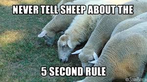 Eating Meme - 23 funny sheep memes botch