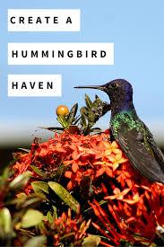 native flowering plants create a hummingbird haven with native flowering plants plants