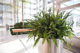 plants for office seven facts about office plants market mad house