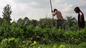 peasant woman take care off vegetable garden stock video footage
