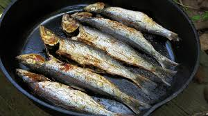 90 percent of fish we use for fishmeal could be used to feed