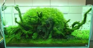 Aquascape Takashi Amano Nature Aquariums And Aquascaping Inspiration